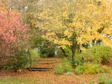Fall near labyrinth